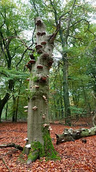 Forest, Autumn, Tree, Mushrooms, Green, Leaves