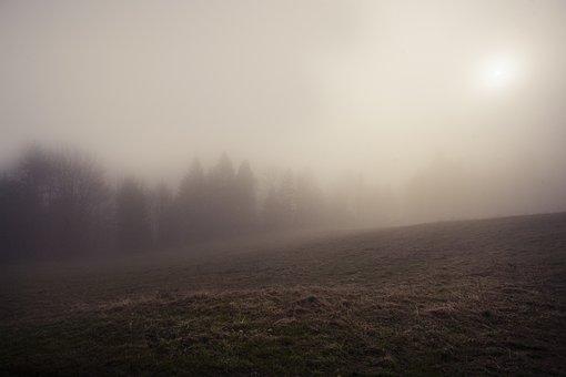 The Fog, Mystery, Forest, Dark, Nature, Tree, Fantasy