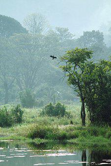 Kerala, India, Grassland, Meadow, Nature, Landscape