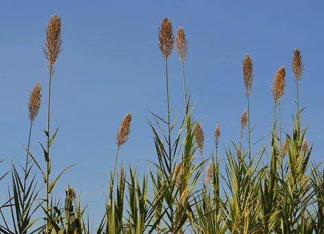 Flowers, Nature, Green, Summer, Croatia, Sun, Sky