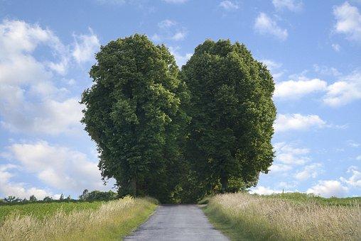 Heart, Road, Summer, Landscape, Meadow, Trees