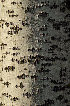 Texture, Tree, Pattern, Nature, Structure, Brown, Trunk