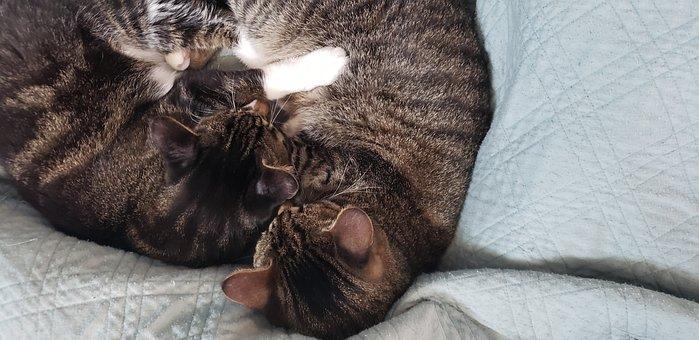 Cats, Kitty, Cat Hug, Pets, Furbabies
