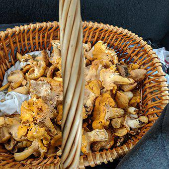 Chanterelles, Mushrooms, Basket, Mushroom, Food