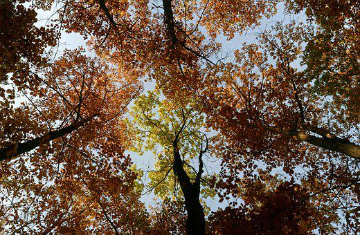 Trees, Top, Forest, Leaves, Autumn, Colors, Sky