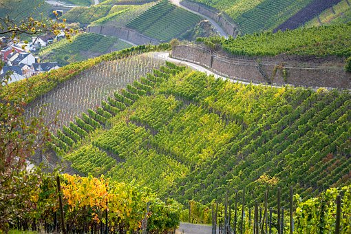 Vineyard, Terraces, Wine, Winegrowing, Vines, Slope