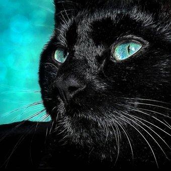 Black Cat, Kitten, Pet, Cute, The Witch, Fur, Portrait