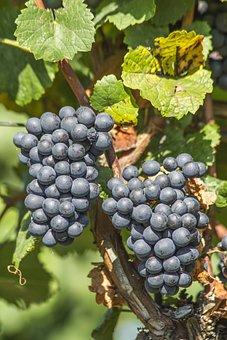 Wine, Vineyard, Landscape, Grapes, South Moravia