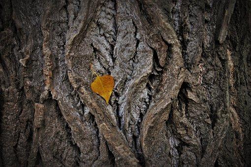 Collapse, Plemie, Yellow Leaves, The Bark, Autumn Theme