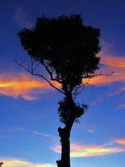 Standing Trees, Silhouette, Branch, At Dusk, Evening