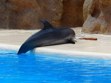 Bottlenose Dolphin, Dolphin, Help, Mate, Clean Up, Dry