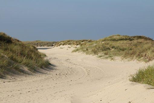 Dunes, Plants, Nature, Green, Netherlands