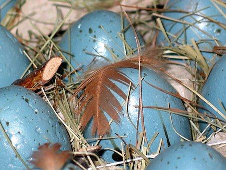 Easter Eggs, Easter Nest, Easter, Easter Egg, Spring