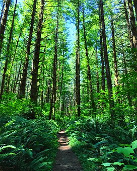 Tillamook State Forest, Oregon, Forest, Nature
