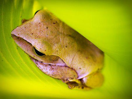 Tree, Frog, Rain, Gorgeous, Natural, Tropical, Green