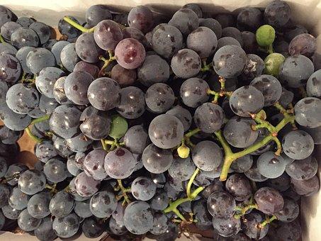 Grapes, Purple, Concord, Fruit, Bunch, Cluster, Autumn
