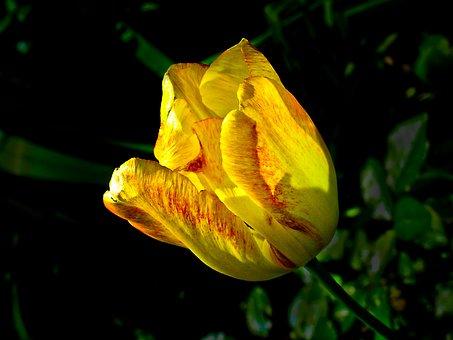 Flower, Garden, Front Yard, Flora, Nature, Bloom