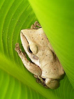Tree, Frog, Rain, Gorgeous, Natural, Tropical, Green
