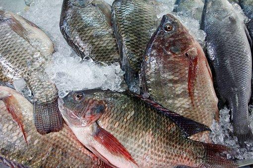Fish, Market, Fish Market, Red, Food, Market Stall