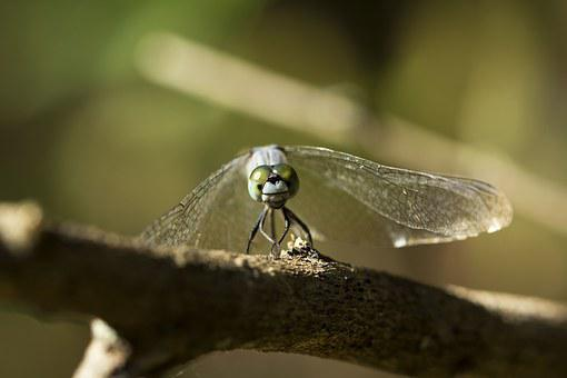 Closeup, Fly, Park, Green, Autumn, View, Life, Sunny