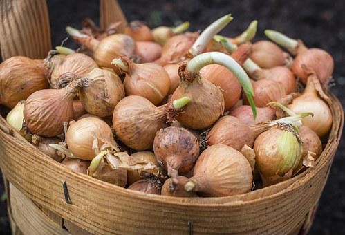 Onions, Basket, Scallions, Food, Planting, Agriculture