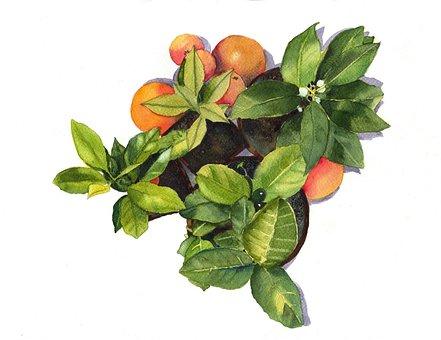 Oranges, Green, Plants, Leaf, Watercolor, Green Leaf