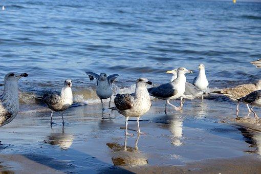 Sea, The Seagulls, Poland, Beach, A View Of The Sea
