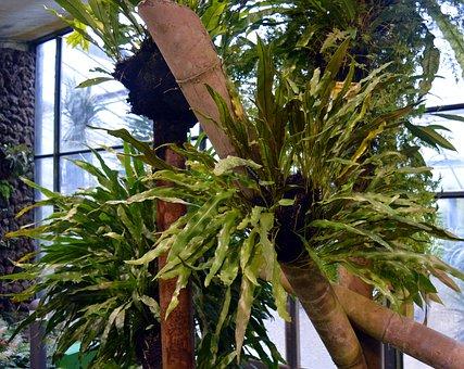 Fern, Green, Nature, Vascular Cryptogams, Tree Fern