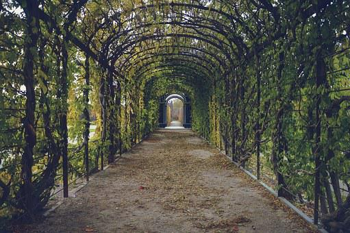 Garden, Path, Way, Tunnel, Park, Leaves, Walk, Corridor