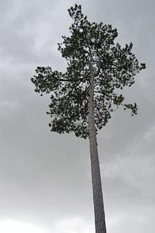 Tree, Sky, Grey, Landscape, Nature, Clouds, Trees