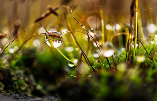 Moss, Drip, Water, Nature, Green, Wet, Macro, Grass