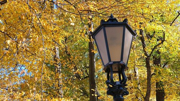 Replacement Lamp, Park, Autumn, Light, Tree, Lantern