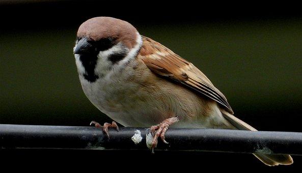 Bird, Sparrow, Se Sharing, A Bird, Female, Wire, Beans