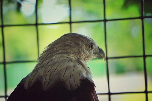 Eagle, Hunter, Dangere, Bird, Raptor, Hawk, Owl