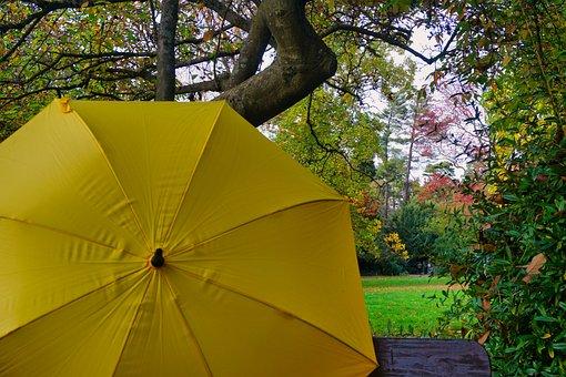 Autumn, Umbrella, Yellow, Colorful, Park, Tree, Leaves