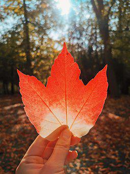 Autumn, Case, Earthhour, October, Outdoor, Red, Nature