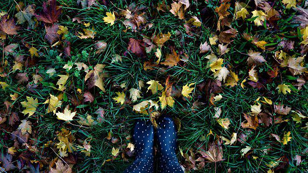 Autumn, Leaves, Rubber Boots, Colorful, Moist, Dark