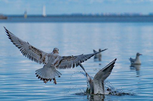Water, Bird, Beach, The Baltic Sea, St Petersburg