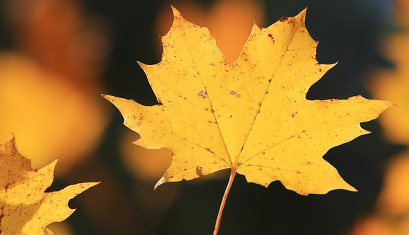 Autumn, Fall, Orange, Color, Colorful, Golden, Sunny