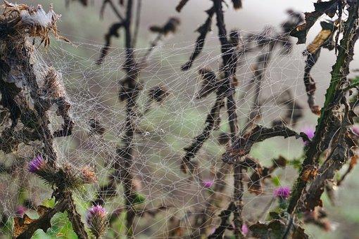 Spider Webs, Morgentau, Cobweb, Nature, Dew, Web