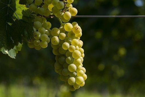Grape, Wine, White Wine, Grapes, Fresh, Viniculture