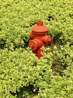 Fire Hydrant, Bushes, Green, Red, Nature