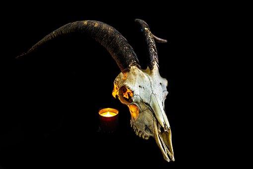 Skull, Death, Skeleton, Head, Horror, Halloween, Fear