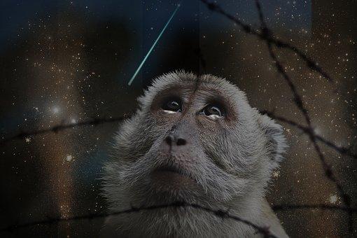 Manipulation, Monkey, Animal, Fire, Wire, Shooting Star