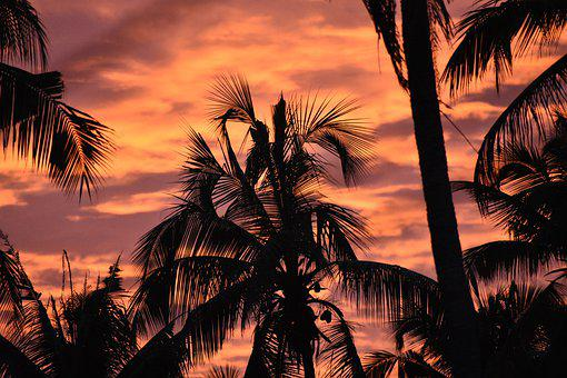 Sunset, Coconut Trees, Coconut, Nature, Sky, Tropical