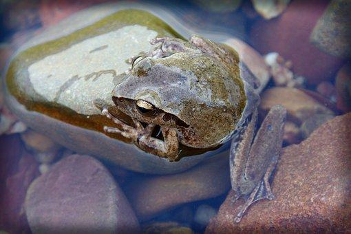Nature, Frog, River, Amphibian, Wildlife