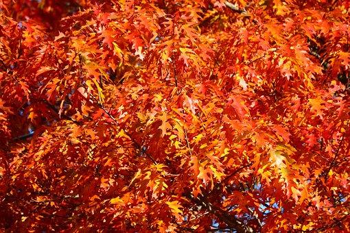 Fall, Leaves, Colors, Nature, Tree, Colorful, Autumn