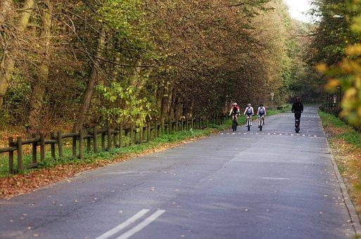 Landscape, Forest, Nature, Road, Asphalt, Autumn