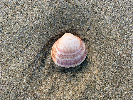 Shell, Molluscum, Marine, Beach, Biology, Earth