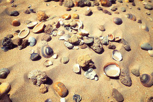 Beach, Shells, To, Sea, Ocean, Shell, Nature, Sand